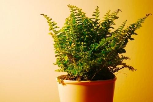 Для чого потрібні кімнатні рослини