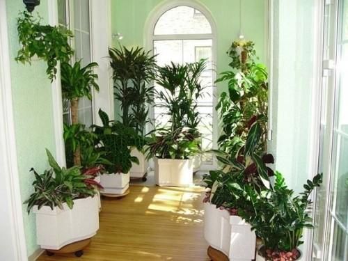 Як виростити кімнатні квіти з насіння