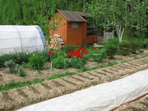 Дизайн садового участка 6 3