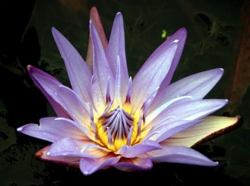 Квіти це не тільки звичайне хобі квіти