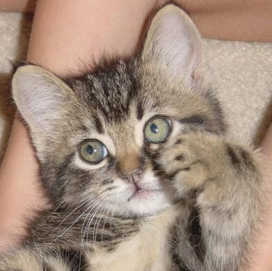 Як відучити кошеня кусати руки