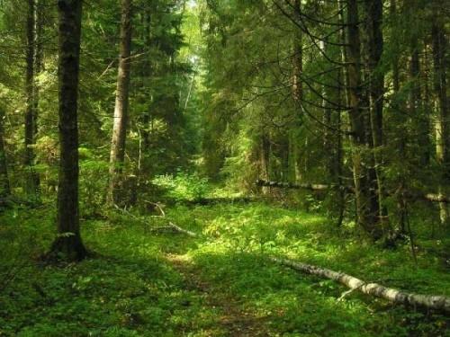 Як захистити ліс