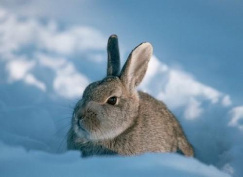 Як напувати кроликів взимку
