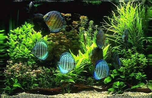 Як знизити жорсткість в акваріумі