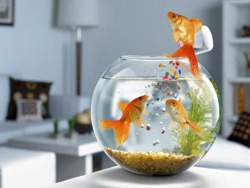 Як містити рибок в акваріумі