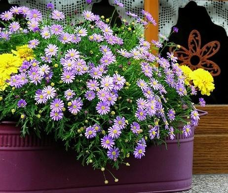 Як виростити квіти з насіння