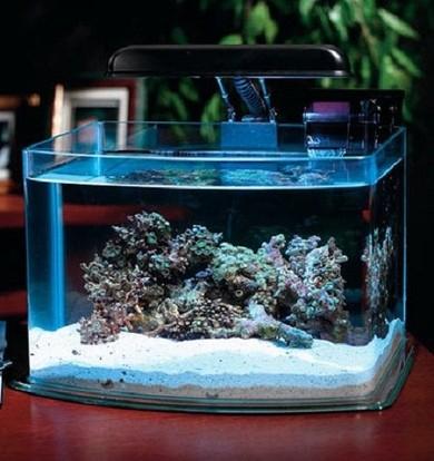 Як міняти воду рибкам в акваріумі